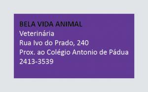 Bela Vida Animal