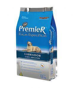 Labrador - Adultos